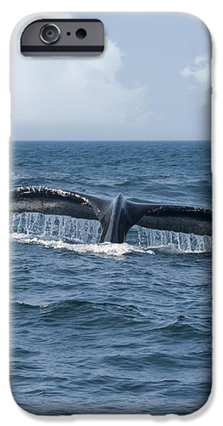Humpback Whale Fin iPhone Case by Juli Scalzi