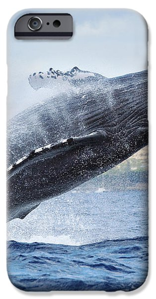 Humpback whale iPhone Case by M Swiet Productions