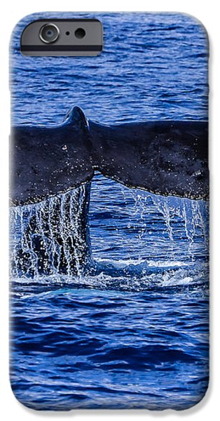 Humpback Whale Tail Fluke during deep dive iPhone Case by Puget  Exposure