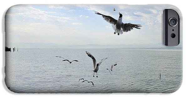 Fed Photographs iPhone Cases - Hungry seagulls flying in the air iPhone Case by Matthias Hauser