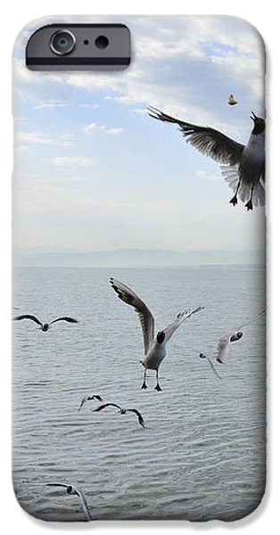 Hungry seagulls flying in the air iPhone Case by Matthias Hauser