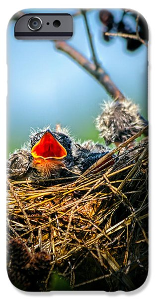 Chicks iPhone Cases - Hungry Tree Swallow Fledgling In Nest iPhone Case by Bob Orsillo