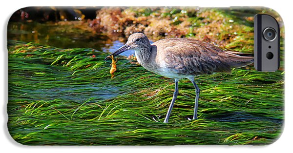 Alga iPhone Cases - Hungry Willet iPhone Case by Mariola Bitner