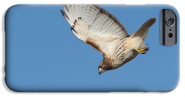 Spirit Hawk iPhone Cases - Hunting Hawk iPhone Case by Mircea Costina Photography