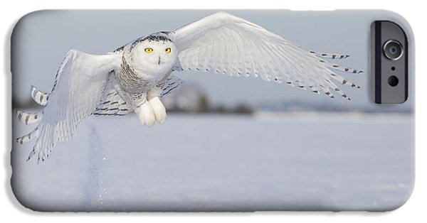 Angel Blues iPhone Cases - Hunting Snowy Owl iPhone Case by Mircea Costina Photography