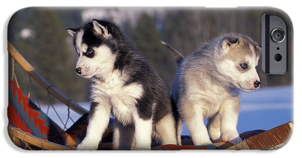Huskies iPhone Cases - Huskies On A Sled iPhone Case by Rolf Kopfle