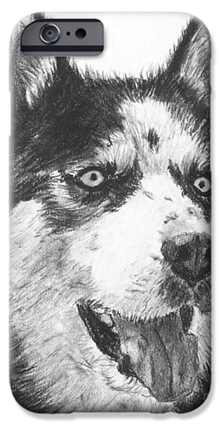 Husky Drawings iPhone Cases - Husky Drawing iPhone Case by Kate Sumners
