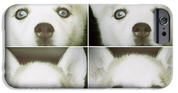 Huskies Digital Art iPhone Cases - Husky Face iPhone Case by Susan Stone