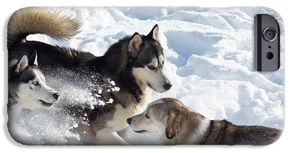 Huskies iPhone Cases - Husky iPhone Case by Dan Marinescu
