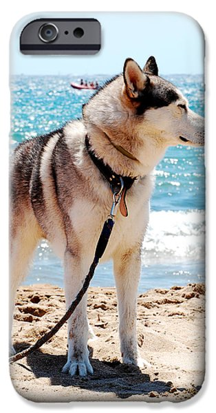 Huskies Photographs iPhone Cases - Husky on the beach iPhone Case by Gina Dsgn