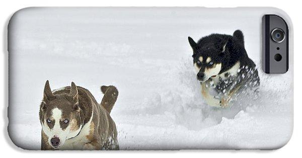 Huskies iPhone Cases - Husky Pursuit iPhone Case by Jim Tobin