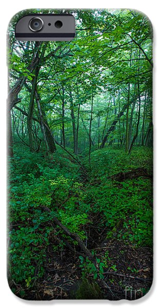 Bayside iPhone Cases - Huth Ravine iPhone Case by Andrew Slater
