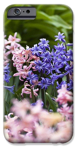 Hyacinth Garden iPhone Case by Frank Tschakert
