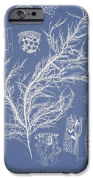 Algae iPhone Cases - Hyalosiphonia caespitosa Okamura iPhone Case by Aged Pixel