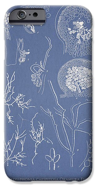 Hyalosiphonia caespitosa Okamura Valonia Confervoides iPhone Case by Aged Pixel