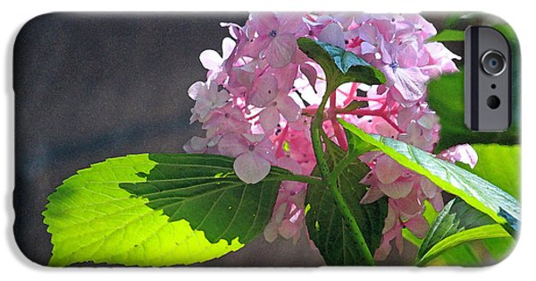 Floral Digital Art Digital Art iPhone Cases - Hydrangea Heaven iPhone Case by Suzanne Gaff