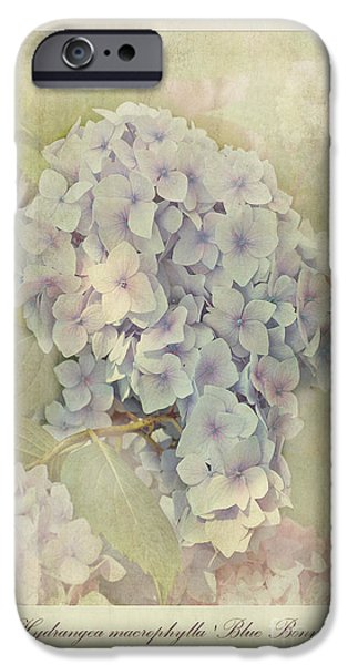 Stamen iPhone Cases - Hydrangea macrophylla Blue Bonnet iPhone Case by John Edwards
