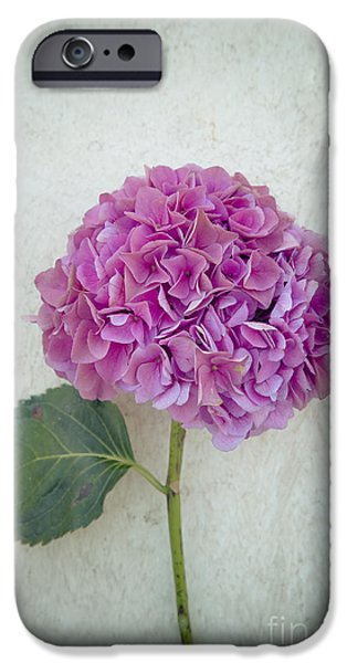 Flora iPhone Cases - Hydrangea iPhone Case by Maria Heyens