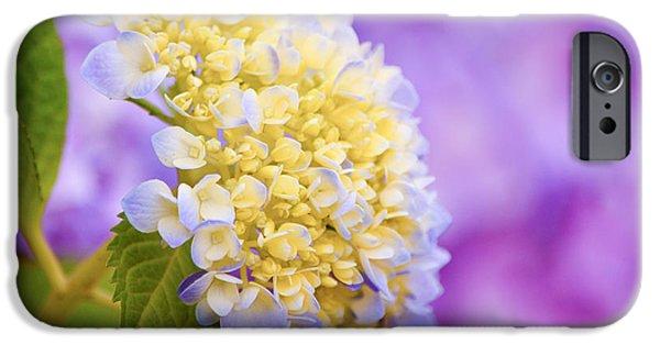 Purple Hydrangeas iPhone Cases - Hydrangea on Purple iPhone Case by Parker Cunningham