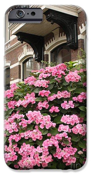 Hydrangeas in Holland iPhone Case by Carol Groenen