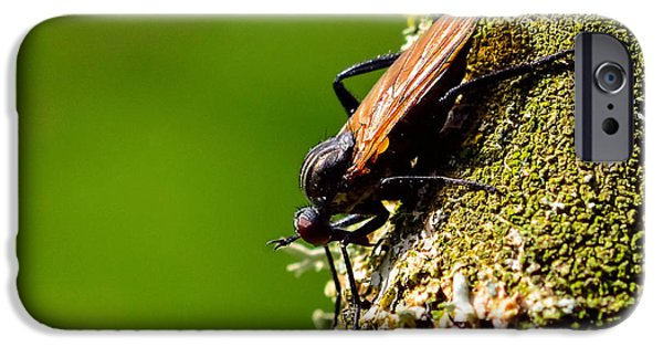 Cut-outs Mixed Media iPhone Cases - Hymenoptera iPhone Case by Toppart Sweden