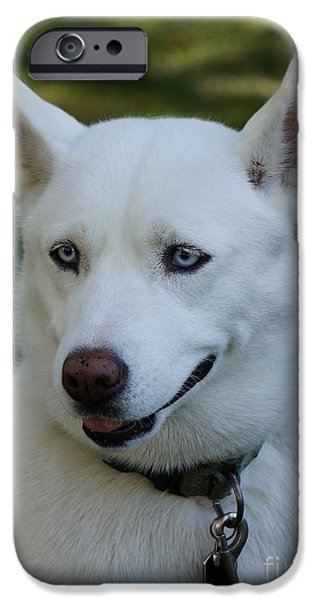 Huskies iPhone Cases - I am beatiful iPhone Case by Zori Minkova