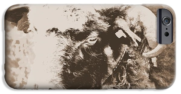 Dog Trots Photographs iPhone Cases - I am going alone iPhone Case by Hilde Widerberg