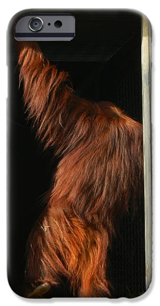 Orangutan Digital Art iPhone Cases - I Bid You All Adieu iPhone Case by Emmy Marie Vickers