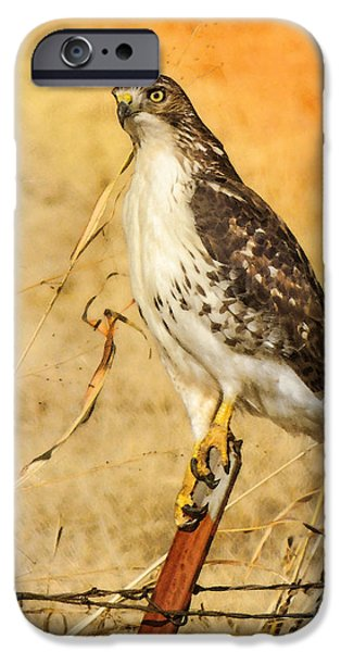 Red Tail Hawk Digital Art iPhone Cases - I Can See Clearly iPhone Case by Betty LaRue
