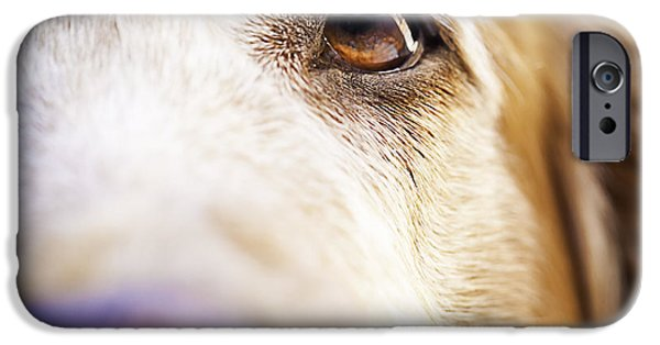 Dogs iPhone Cases - I can see my nose iPhone Case by Patricia Bainter