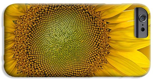 Sunflower iPhone Cases - I Got Sunshine iPhone Case by Susan Candelario