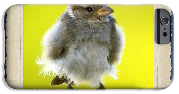Baby Bird Digital iPhone Cases - I Miss My Nest iPhone Case by Betty LaRue