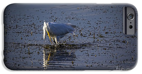 White Bird iPhone Cases - I Missed iPhone Case by Marvin Spates
