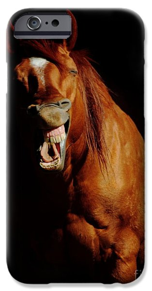 The Horse iPhone Cases - Horse Whisperer iPhone Case by Robert Frederick