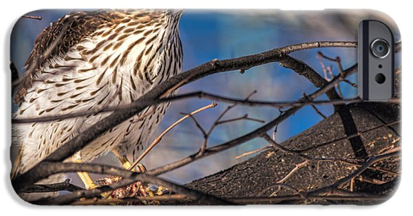 Snowy Day iPhone Cases - Do you see my beakstick iPhone Case by Rocan Bradosty