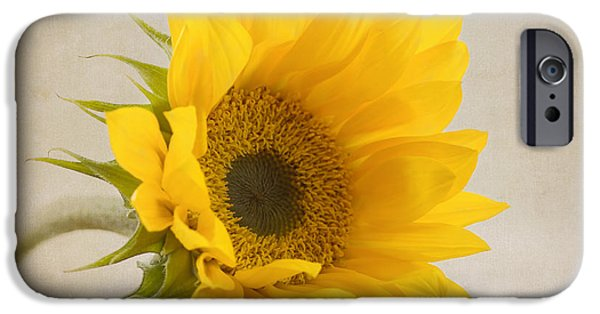 Sunflowers iPhone Cases - I See Sunshine iPhone Case by Kim Hojnacki