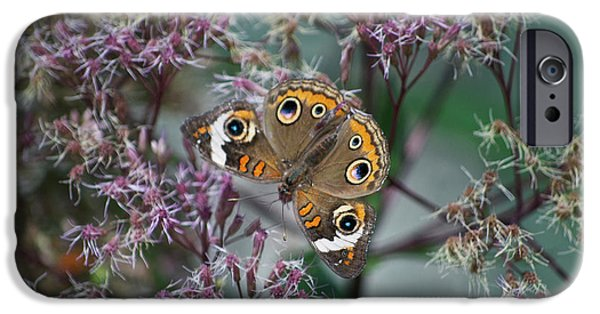 Central Il iPhone Cases - I See You Butterfly iPhone Case by Thomas Woolworth