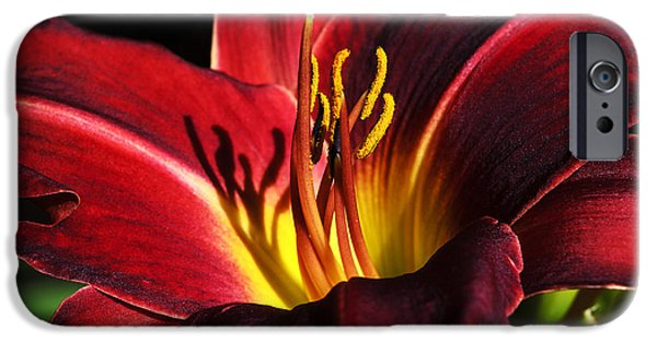 Asiatic Lily iPhone Cases - I Shadow Your Beauty iPhone Case by Camille Lopez