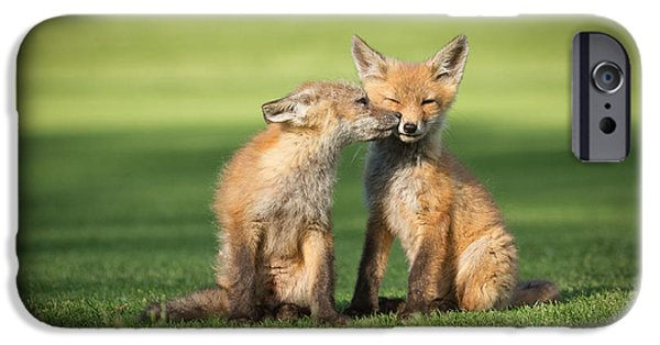 Fox Kit iPhone Cases - I Still Love You iPhone Case by Everet Regal