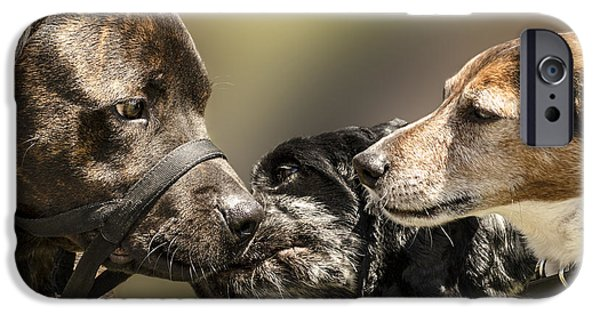Dog Close-up iPhone Cases - I Told You She Fancied You iPhone Case by Linsey Williams