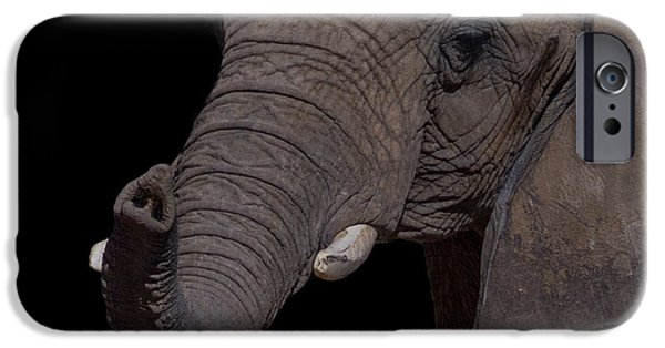Elephant iPhone Cases - I Want You iPhone Case by Ernie Echols