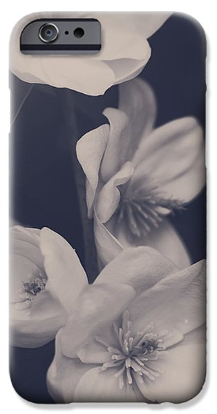 Monotone iPhone Cases - I Was Always Your Flower iPhone Case by Laurie Search