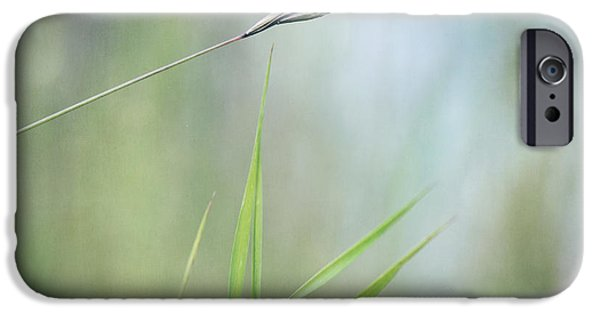 Botanical Photographs iPhone Cases - I will hold you iPhone Case by Priska Wettstein