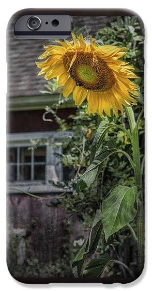 Buttonwood Farm iPhone Cases - Verdent Cottage Garden iPhone Case by Thomas Schoeller