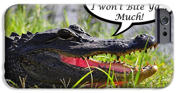 Florida Gators iPhone Cases - I Wont Bite Greeting Card iPhone Case by Al Powell Photography USA