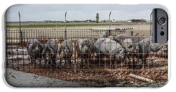Pig Digital iPhone Cases - Iberian pigs iPhone Case by Angel Jesus De la Fuente