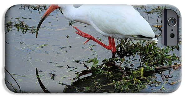 Ibis iPhone Cases - Ibis Mirror iPhone Case by Adam Jewell