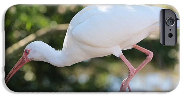 Ibis iPhone Cases - Ibis on the Boardwalk iPhone Case by Carol Groenen