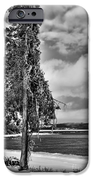 Winter Storm iPhone Cases - Ice Coated Tree iPhone Case by Louise Heusinkveld