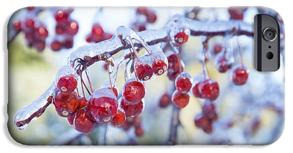 Winter Storm iPhone Cases - Ice Covered Crab Apples iPhone Case by Alana Ranney
